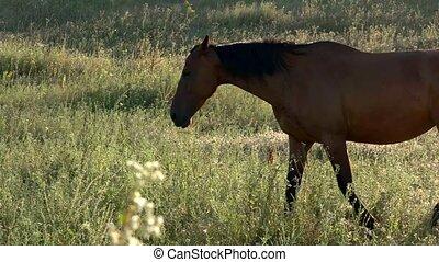 Horse walking on meadow.
