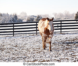Horse walking to viewer in snow