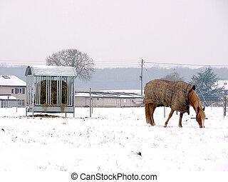 Horse wearing a coat