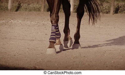 Horse wearing leg bandages - Close up view of the legs of a...