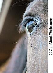 Horse welfare photo