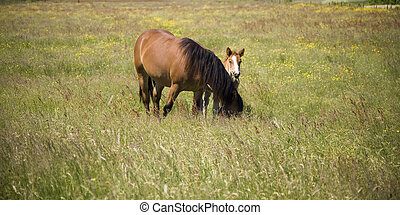 horse whit youth colt on green grass