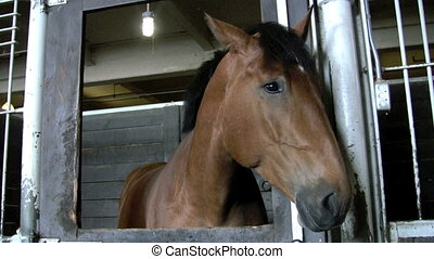 horse wiggling ears - footage of horse in barn stall...