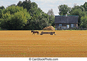 Horse with a cart moves across the field on a summer day
