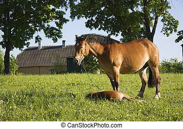 horse with a foal in a meadow
