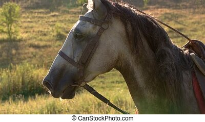 Horse with a saddle. Animal on grass background. Fastest...