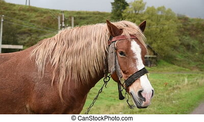 Horse with beautiful mane - Horse head with beautiful mane...