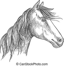 White horse with wavy mane. Mustang stallion sketch portrait with peaked ears and kind trustful glance of eyes
