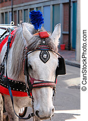 horse with plume - white horse pulling wedding carriage in...