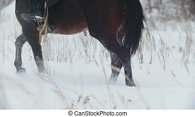 Horse with rider in winter fields, slow-motion, slow-motion...
