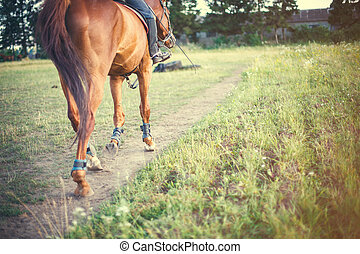 horse with rider is on a track field, space for text