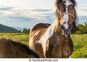 Horse with saliva dripping from its mouth - Horse on a...
