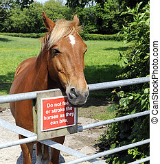 Horse With Warning Sign