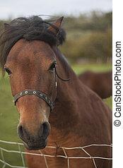horse~1