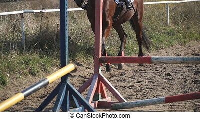 horseback., galloping., partie, prendre, pieds, jockey, ou, ...