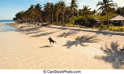 Horseback rider on the beach Aerial view.