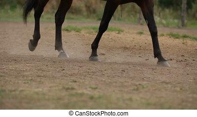 Horseback riding lessons - hooves of horse on hippodrome,...