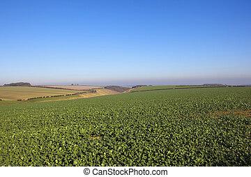 horsedale, tal, landwirtschaft