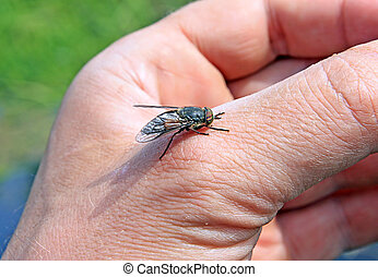 horsefly on hand of the person
