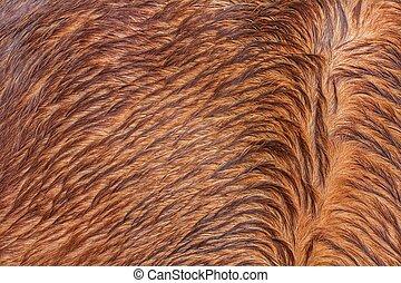 horsehair, ブラウン