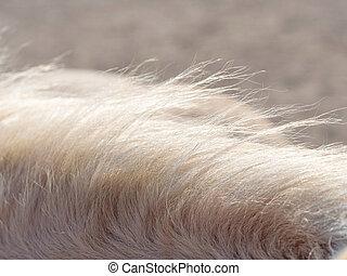 horsehair, 太陽, 反射, 個人