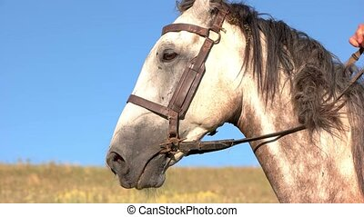 Horseman starts moving. Man pulls the reins. Off we go. Run,...