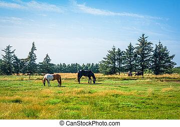 Horsens grazing on a green field