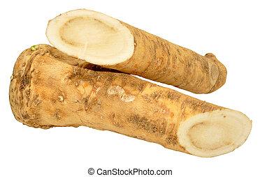 horseradish, raiz