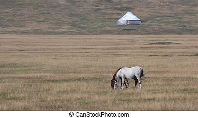 Horses 34