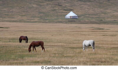 Horses 37