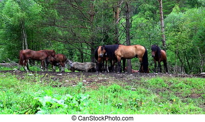 Horses a eat a grass on a summer pasture