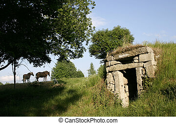 horses and an old cellar