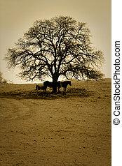 Horses and Bare Oak Tree