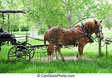 Horses And Carriage - horses harnessed to carriage, tied up...