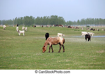 horses and cows on the pasture farm animals