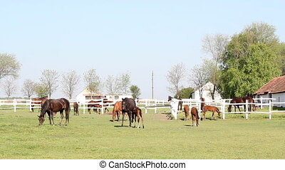 horses and foals at ranch