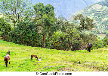 Horses and Lush Green Landscape