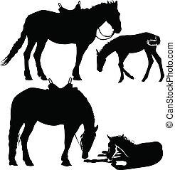 horses animals
