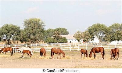 horses at farm