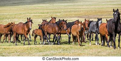 Horses at pasture