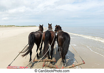 Horses at the beach - Horses pulling tilt car at the beach...
