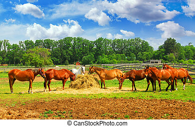 Horses at the ranch - Several horses feeding at the runch on...