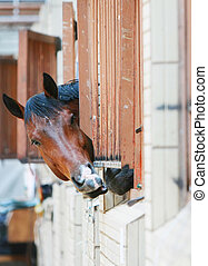 Horse put out her head of a bars