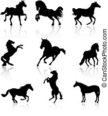 Black horses isolated over white