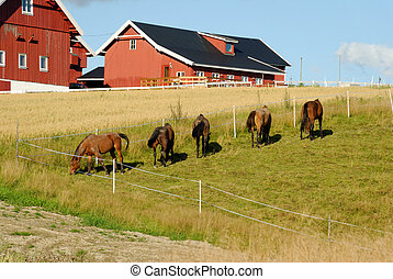 Horses by a Farm - Five horses, grazing in a fold by a farm...