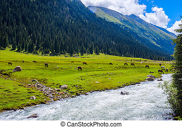 Horses by the river, Kyrgyzstan