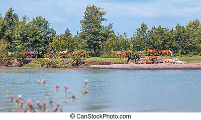 Horses by the river rest on a sunny day