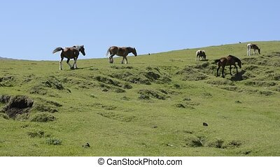 Horses climbing the hill - Eating horses and climbing horses...