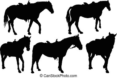 horses collection - vector - illustration of horses...