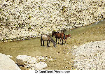 Horses Cooling Off - Two horses and a cold standing in and...
